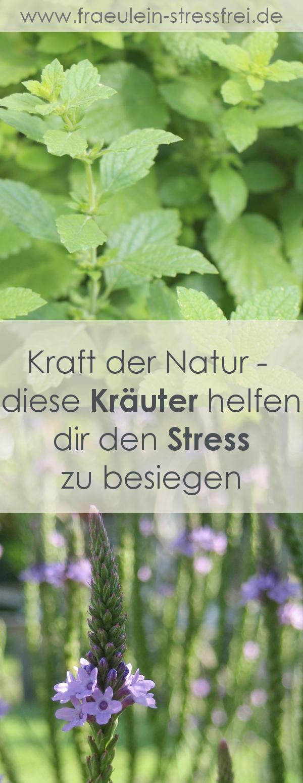 Stressfrei durch die richtigen Kräuter – geht das?