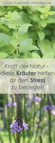 Kraft der Natur - diese Kräuter helfen dir den Stress zu besiegen