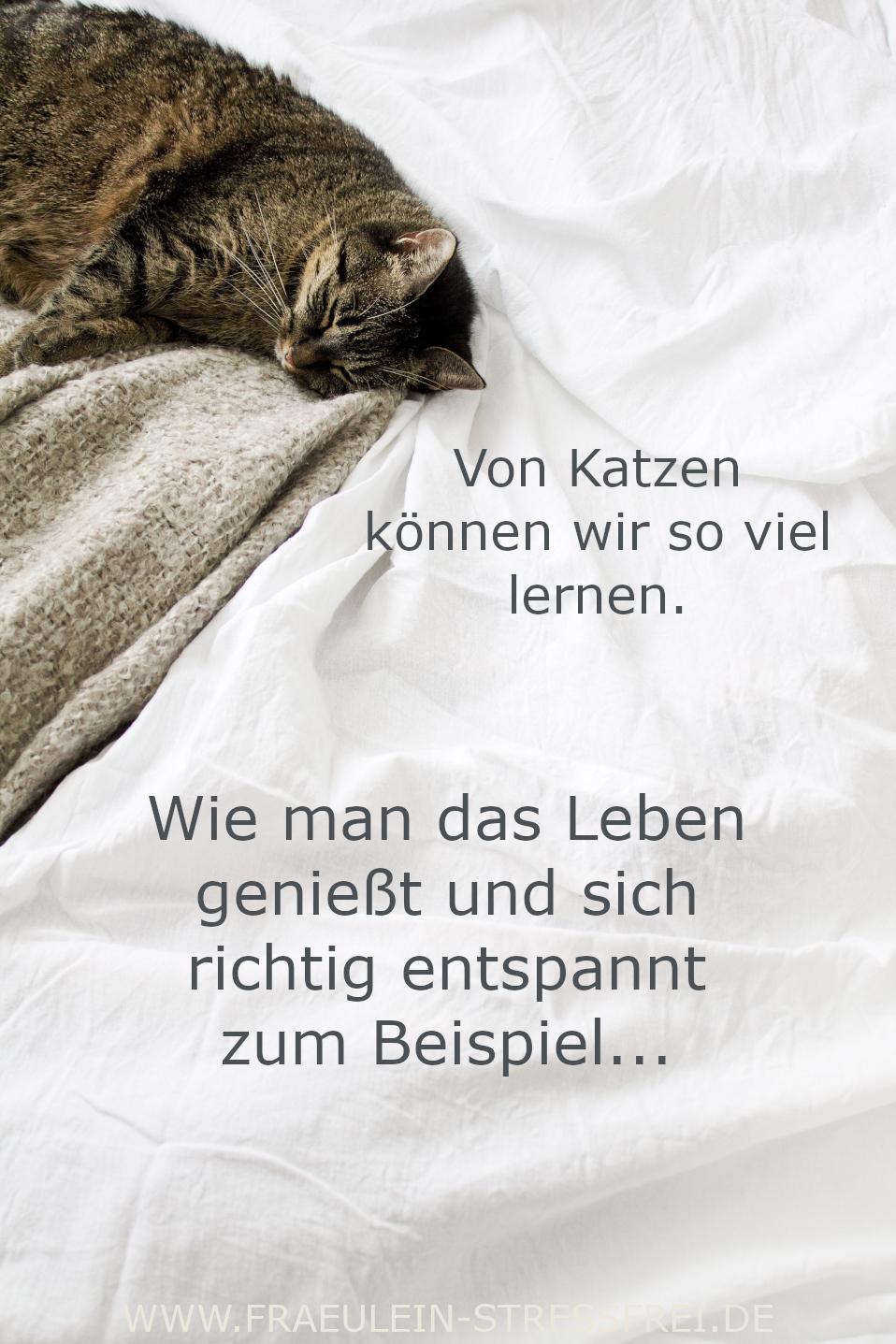 Von Katzen können wir so viel lernen. Wie man das Leben genießt und richtig entspannt zum Beispiel.